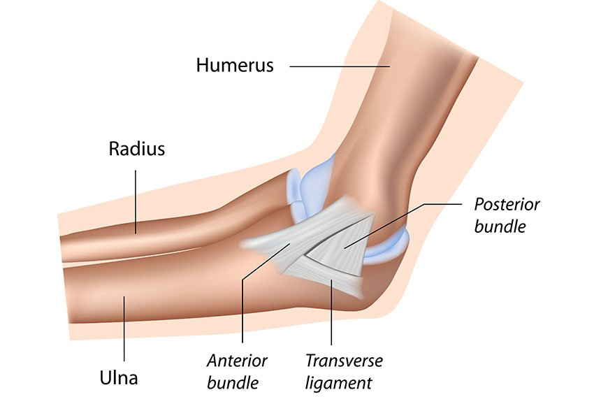Ulnar Collateral Ligament Of The Elbow Reconstruction Lawrence